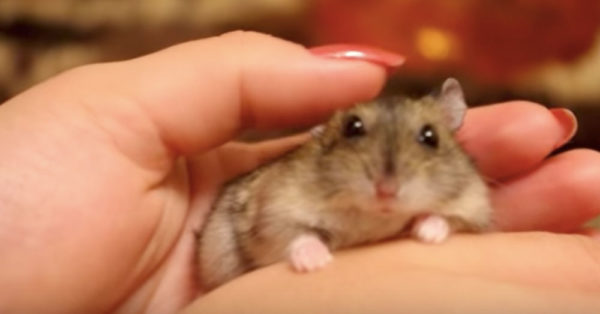 Source: YouTube/Tiny Hamster World