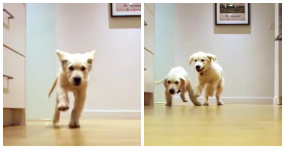 Screen Shot: YouTube/Cheese Pups