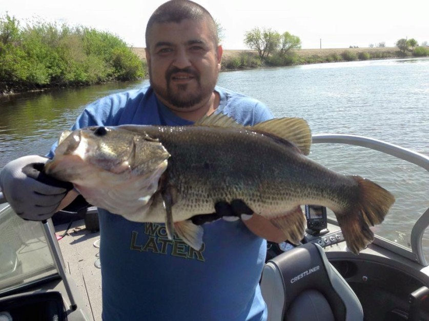 7 1/2 pound monster on the California delta.