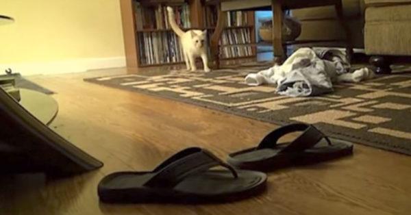 cat-flip-flop0