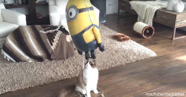 cat-minion