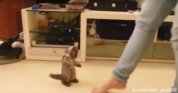 dancingkitty