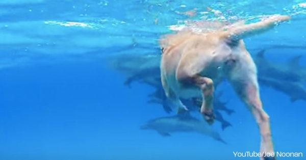 dog-dolphin