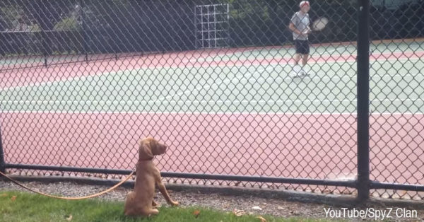 dog-tennis0
