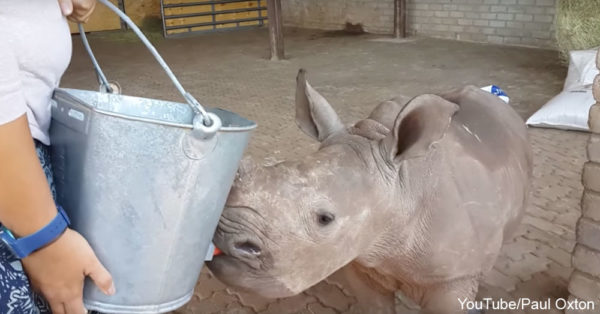 rhinocute