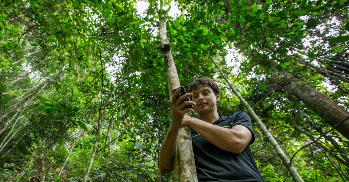 Cell phones help combat deforestation