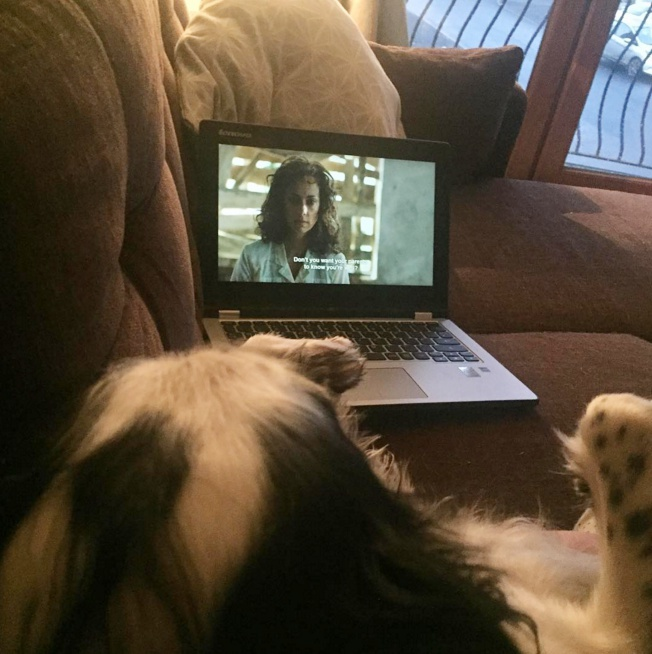 Netflix and dogs sounds like the ultimate staycation / Via Lizzy The Cocker