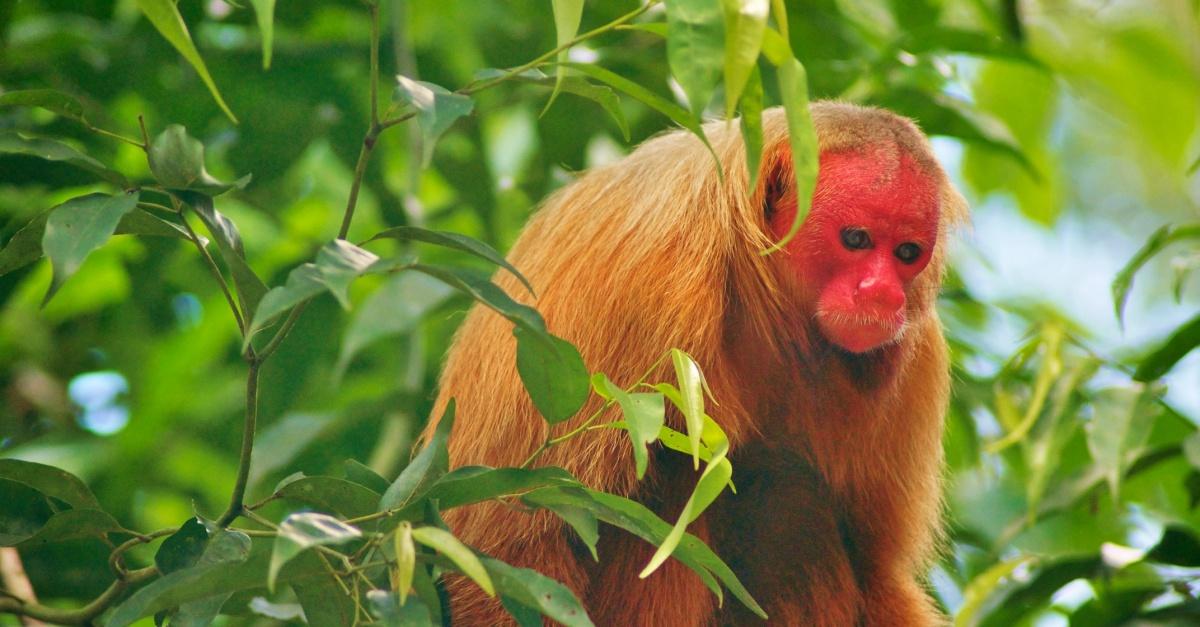 RT Monkey