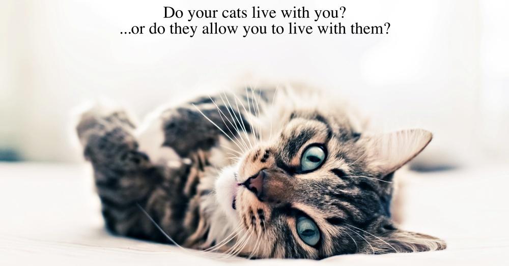 Cat Intro