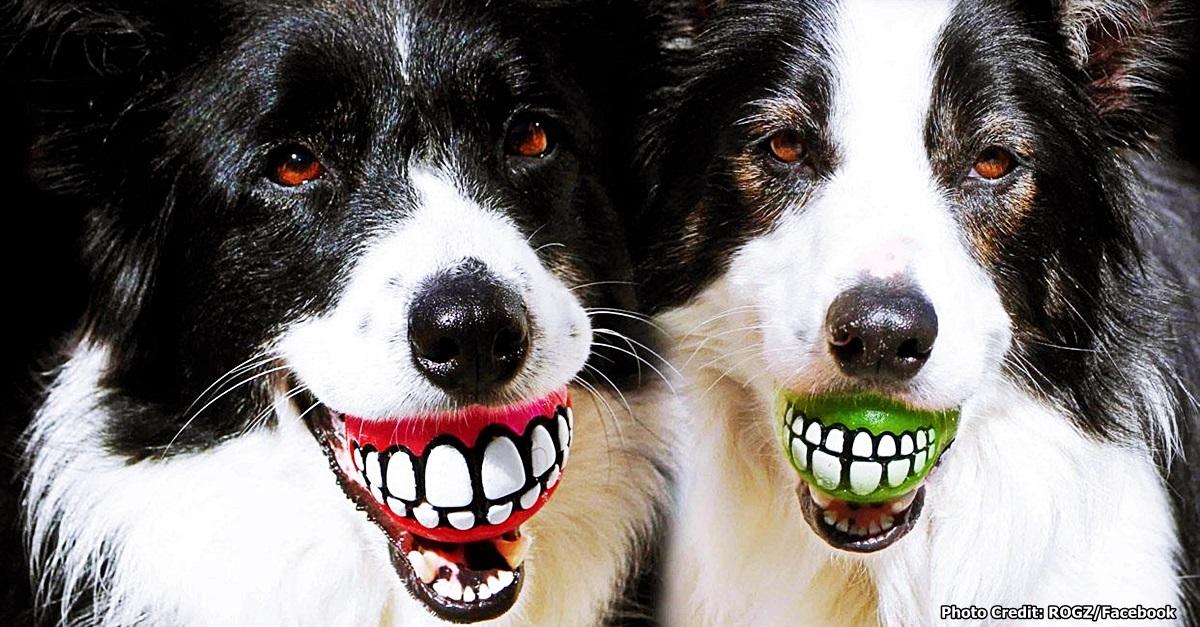 Doggie-Stocking3