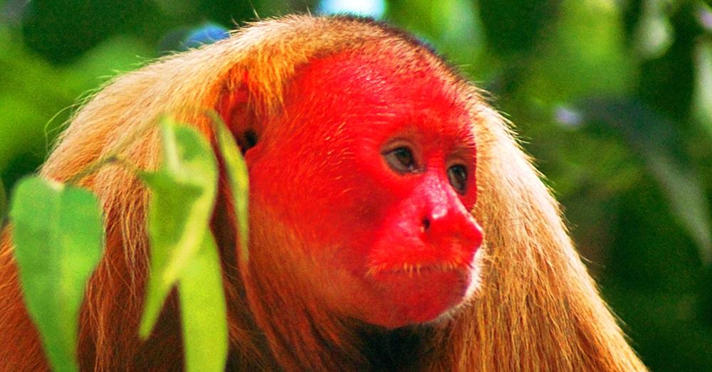 Photo Credit: Aaron Martin via Rainforest Trust