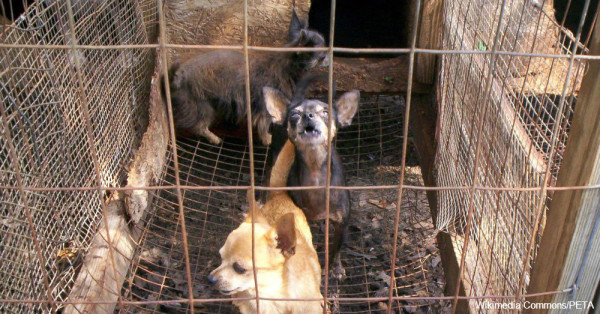 What You Can Do To Stop Puppy Mill Cruelty | The Animal