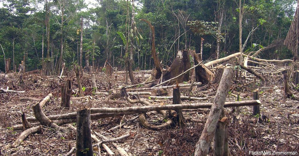 Slash and burn farming in the Amazon / Via Matt Zimmerman