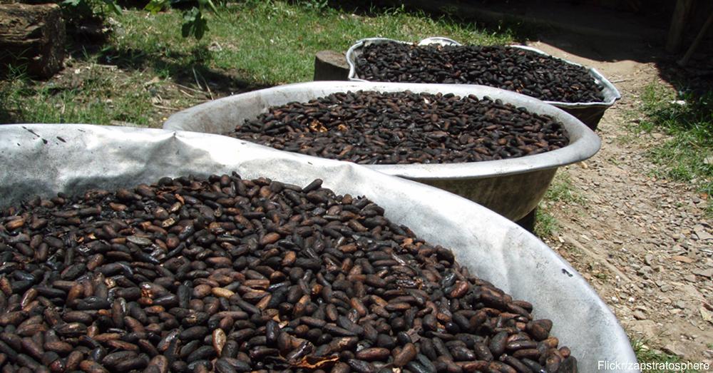 Cocoa beans / Via Zapstratosphere