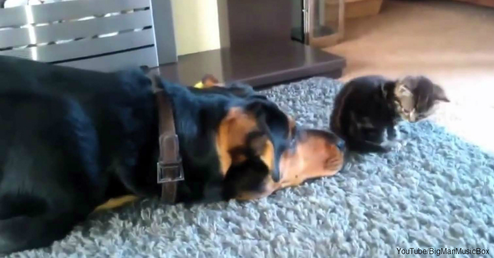 Dogs Ask Cats To Be Their Best Friend Forever The Animal