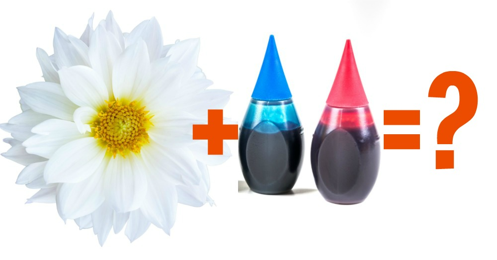 colored-flowers-an-easy-project-for-the-kids-2