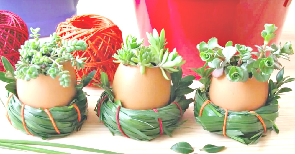 egg-shell-plant-pots-3