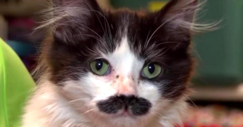 kitty-mustache