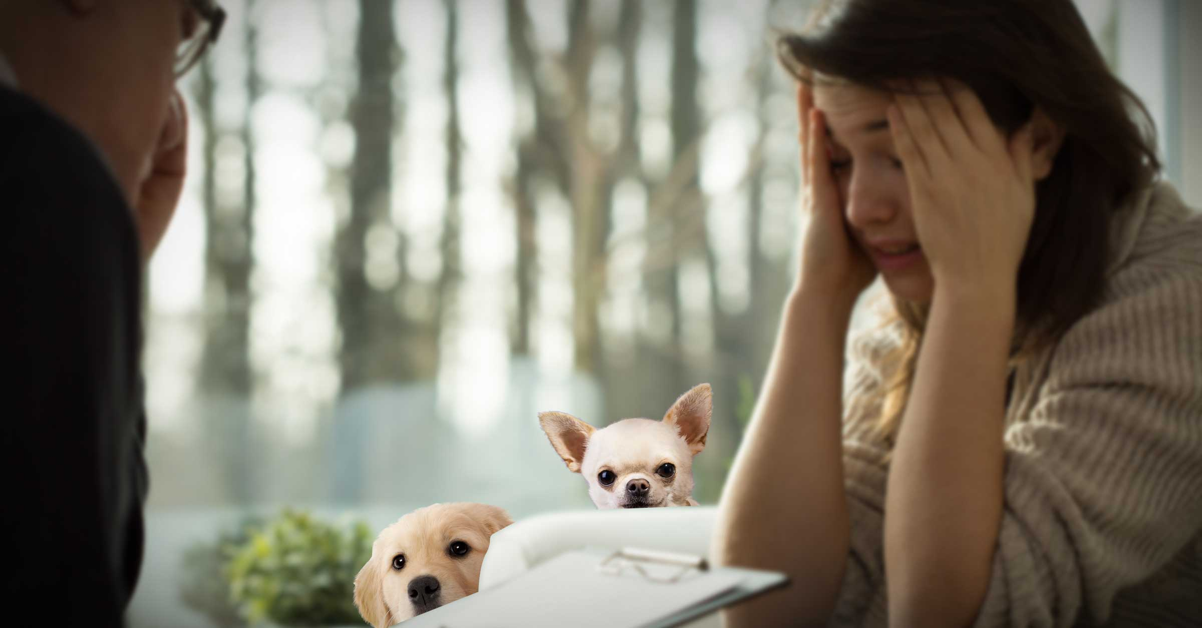 10 Ways Owning A Dog Shortens Your Lifespan