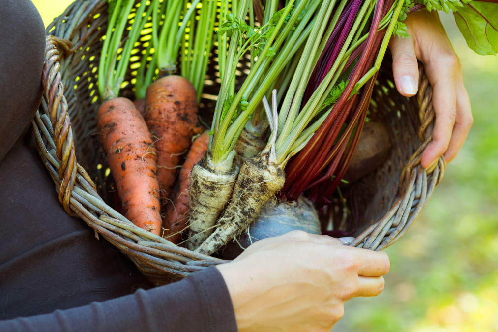 the-best-way-to-store-root-vegetables