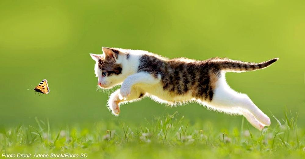 Junge Katze springt über eine Wiese im Gegenlicht