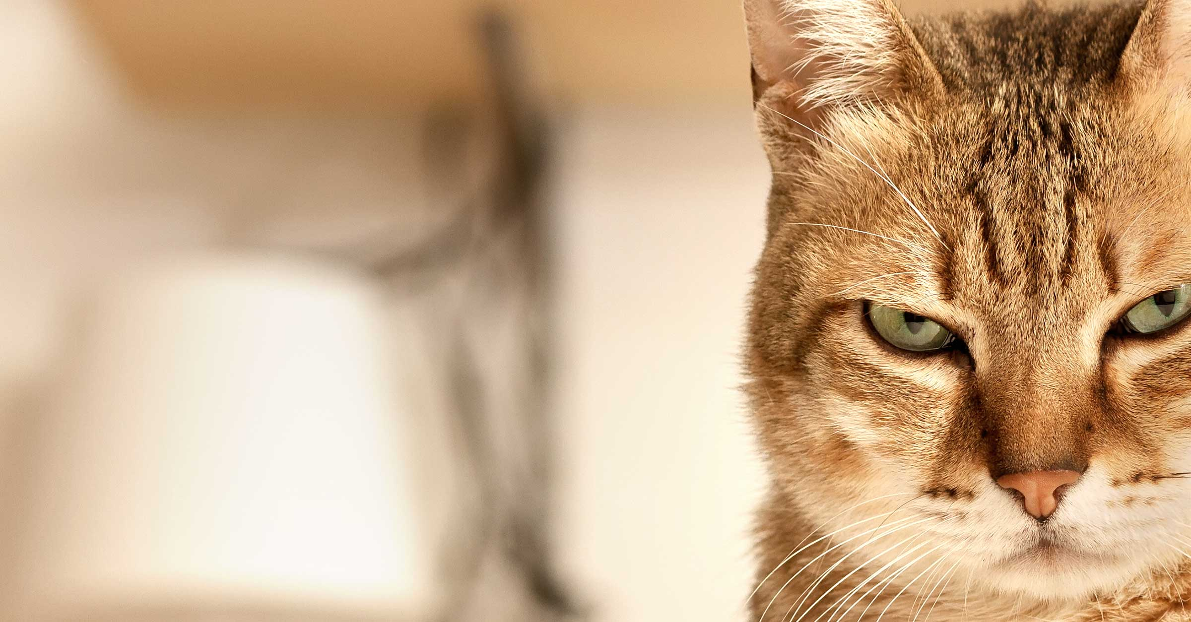 QUIZ: Find Out What Your Cat is Plotting