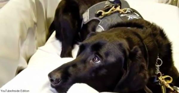 cs-autism-service-dog2