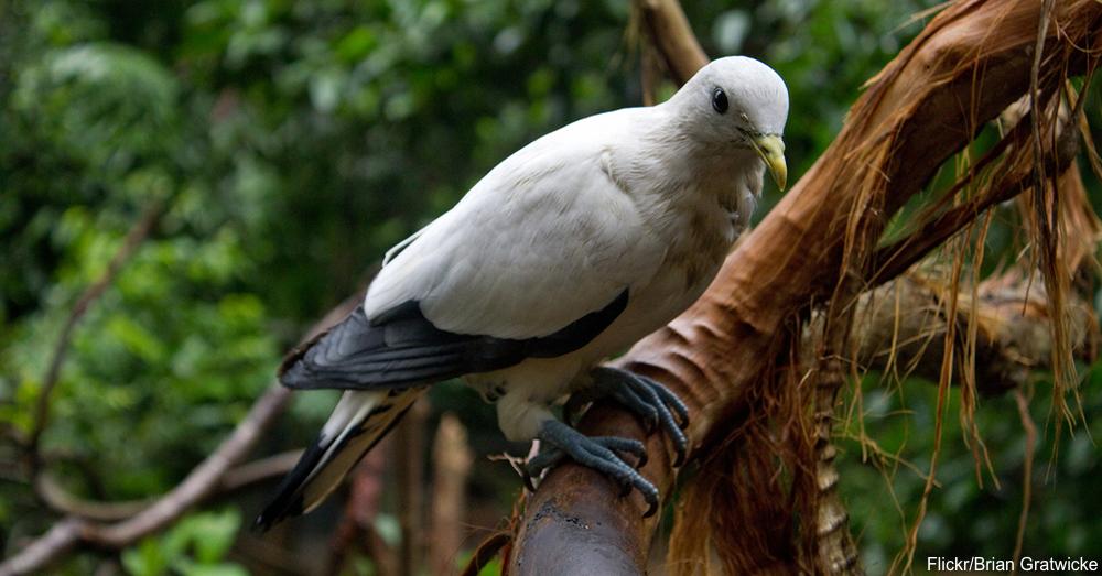 cs-tropical-birds3