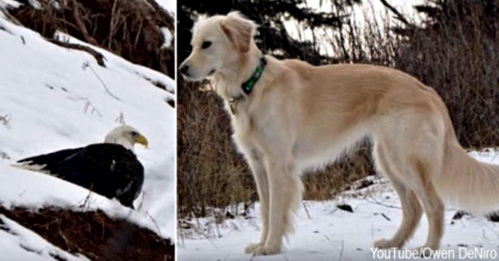 freezing-eagle-saved-1