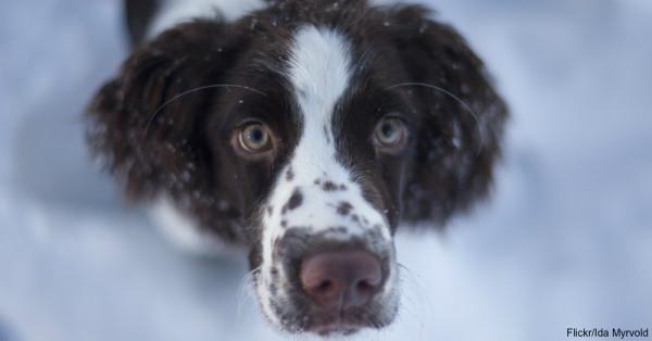 dog-snow-3