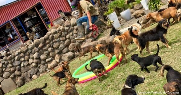Source: Facebook/Territorio de Zaguates The dogs of Territorio de Zaguates, running around, happy and healthy.
