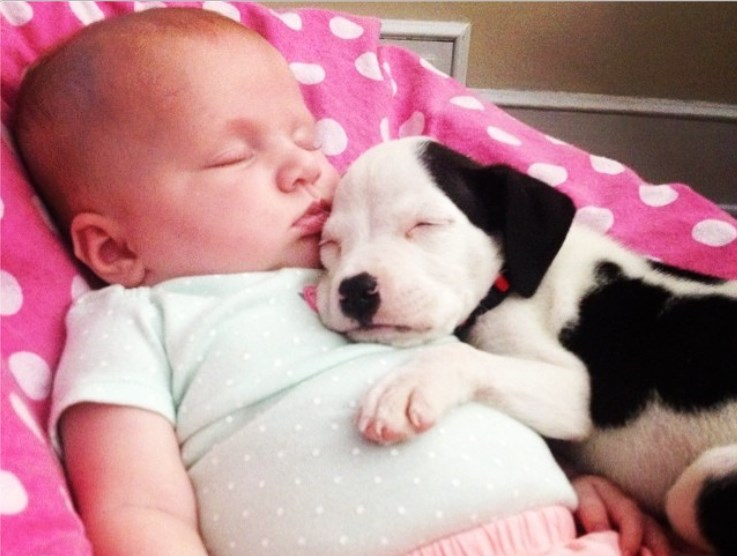 baby and pit 7