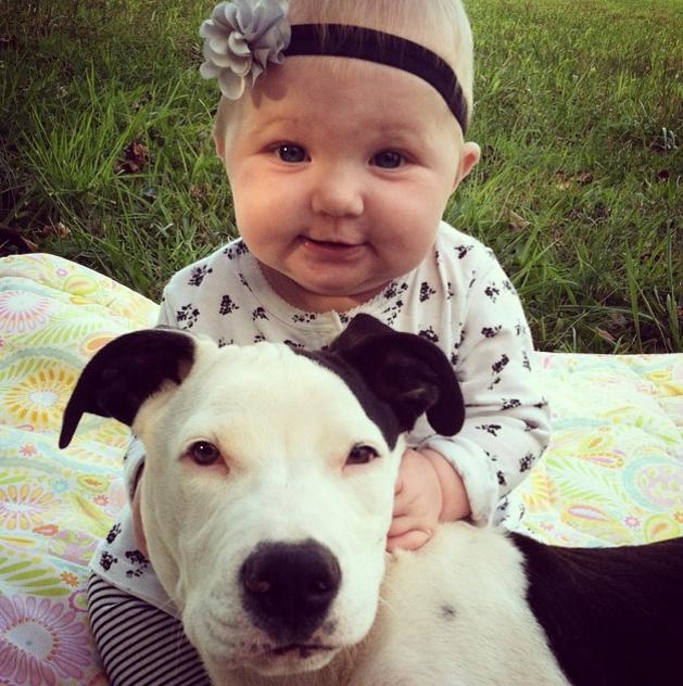 baby and pitt 3