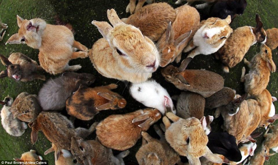 rabbit island6
