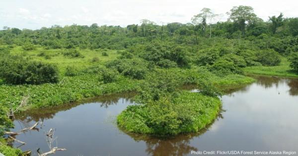razed-rainforest2