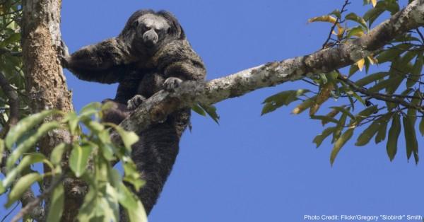 razed-rainforest3