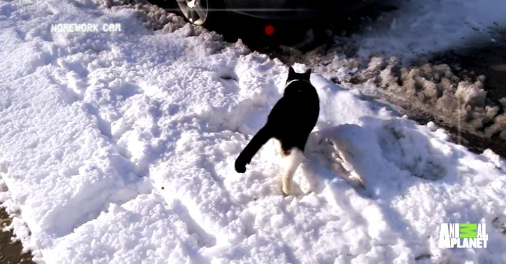 Screen Shot: YouTube/AnimalPlanet