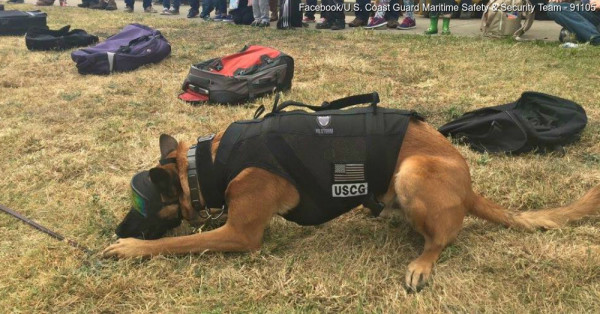 021f16deda Check Out These Coast Guard Dogs  Cool Protective Gear