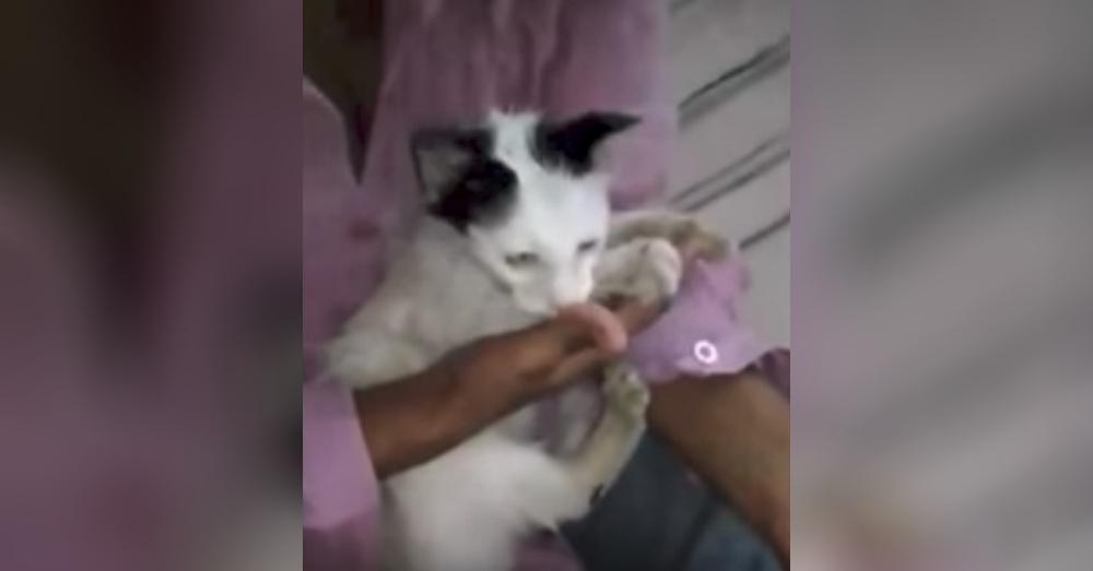 Cat2_1000x523