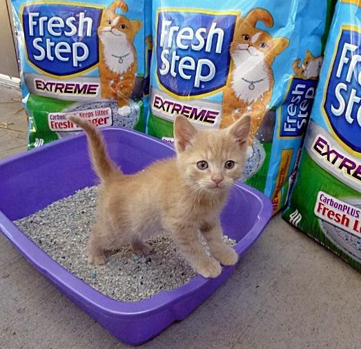 FreshStep-HSCO-KittyBox-Lynne1
