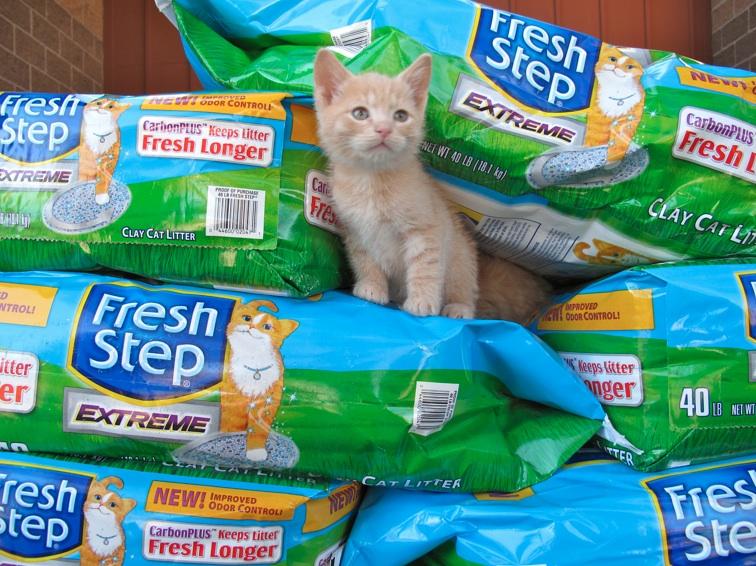FreshStep_HSCO_Kitten2
