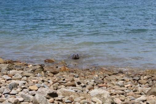 Guernsey SPCA