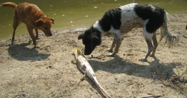 dogswithfish