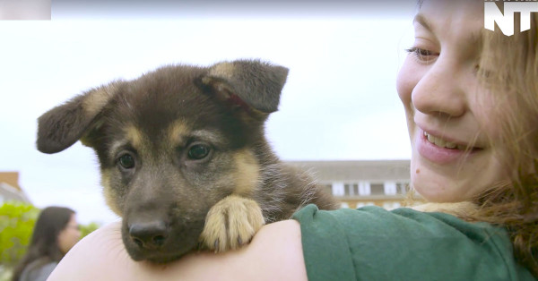 kleenex-puppyu4