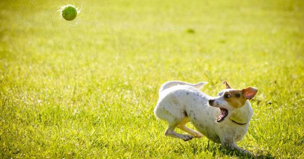 summer-dog1