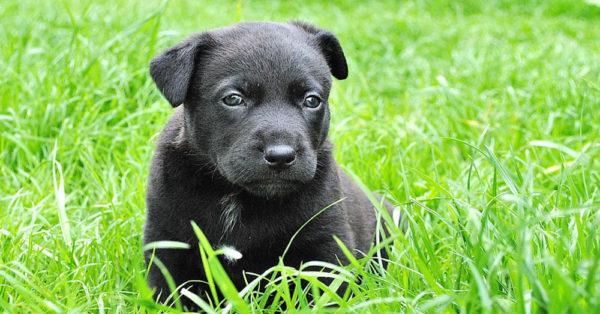 summer-dog2