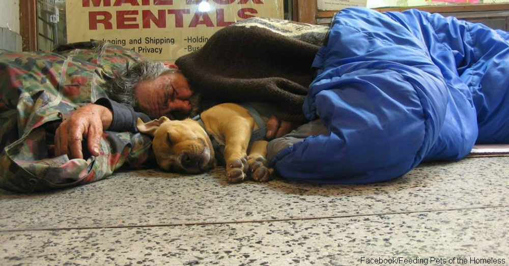For the homeless man s best friend is sometimes man s for Best dogs for companionship