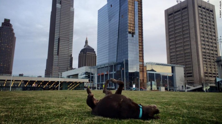 Bella rolling around at a park in Cleveland. (Credit: Robert Kugler)