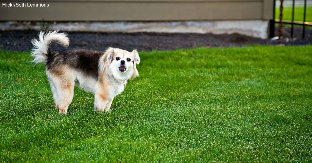 Best Family Dogs With Least Health Problems