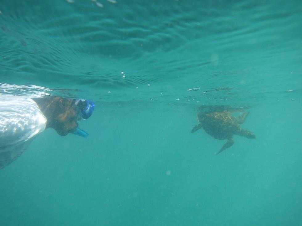 Local Ocean Trust